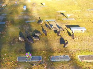 geese_cemetery